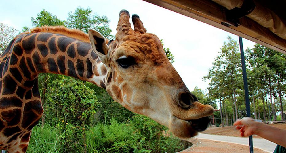 泰國曼谷野生動物園門票(電子票)